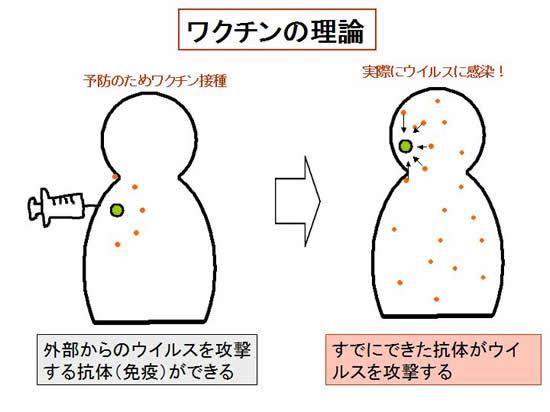 ワクチン接種で抗体ができることを説明する図