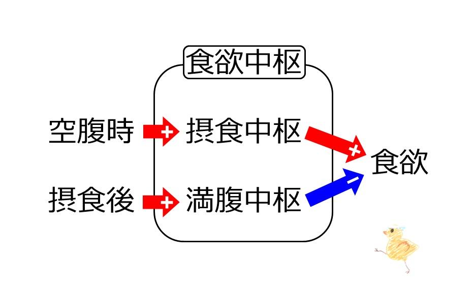 摂食中枢 満腹中枢を説明する図
