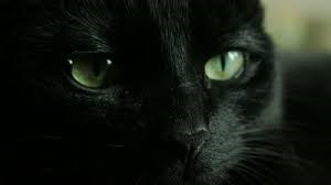 危ない目をしたネコの写真
