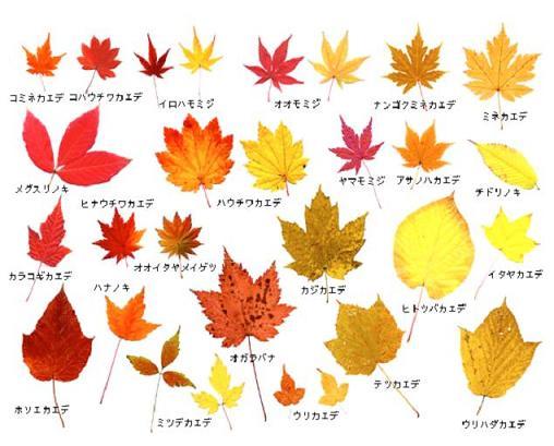 日本で見られる落葉広葉樹の種類