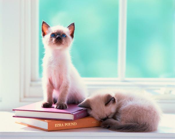 本の上に座るネコ