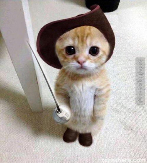 ダルタニアンの衣装を着たネコ