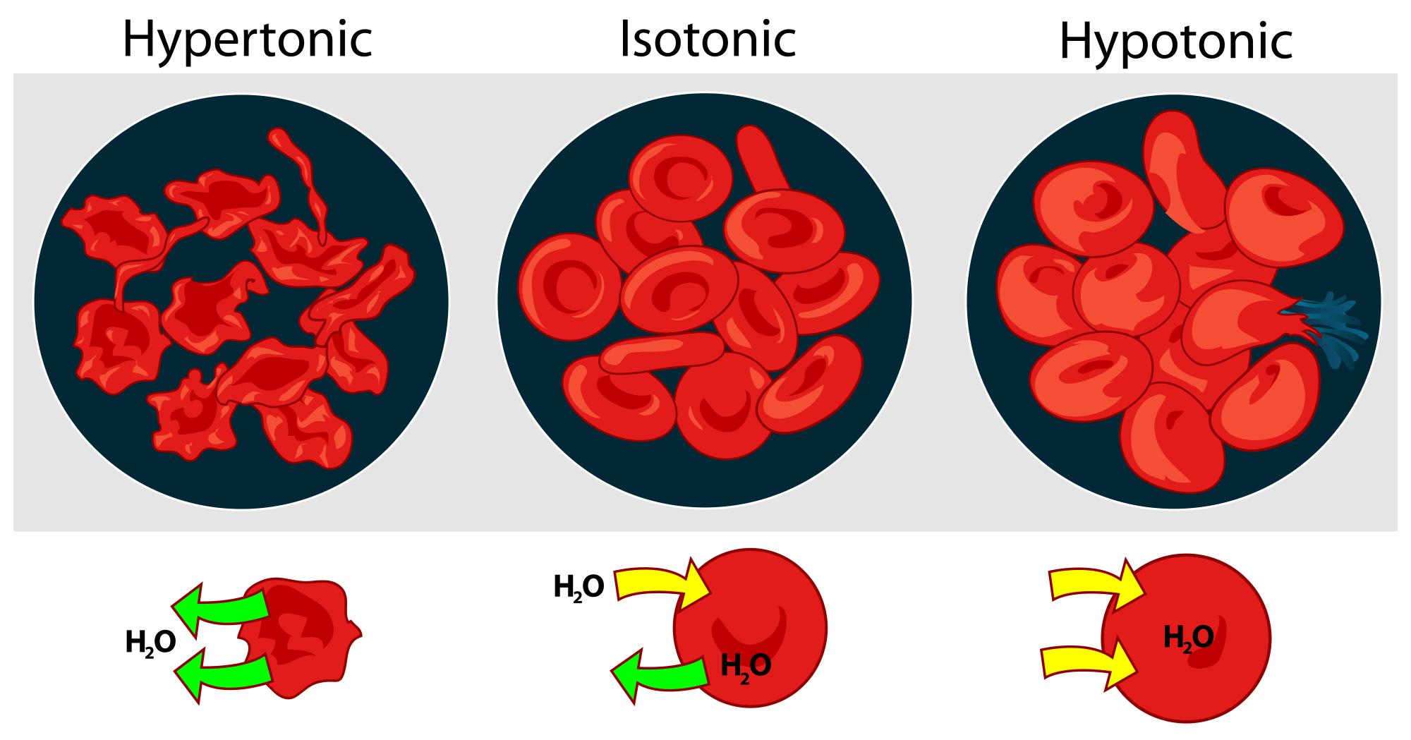 浸透圧の変化による細胞のダメージ