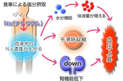 塩分の摂り過ぎで血圧が上昇する機序