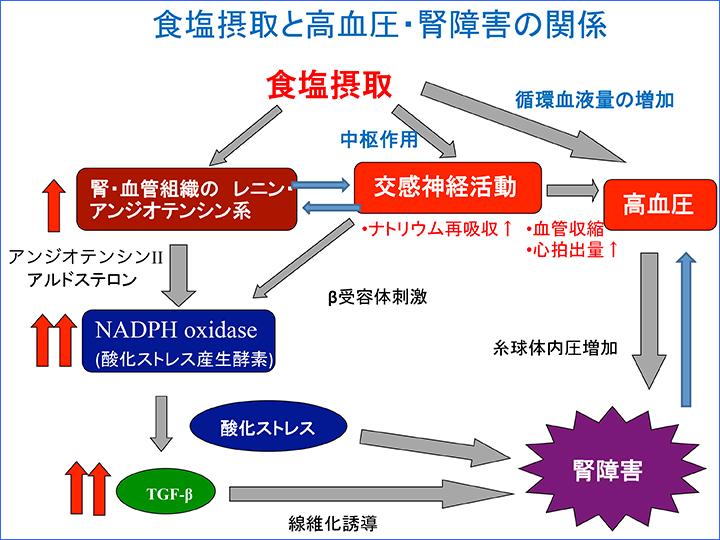 食塩過剰摂取による高血圧が臓器障害を引き起こす機序の図説