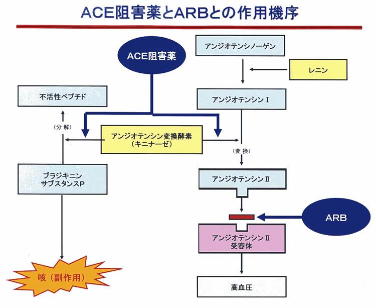 ACE阻害薬 ARBの作用機序