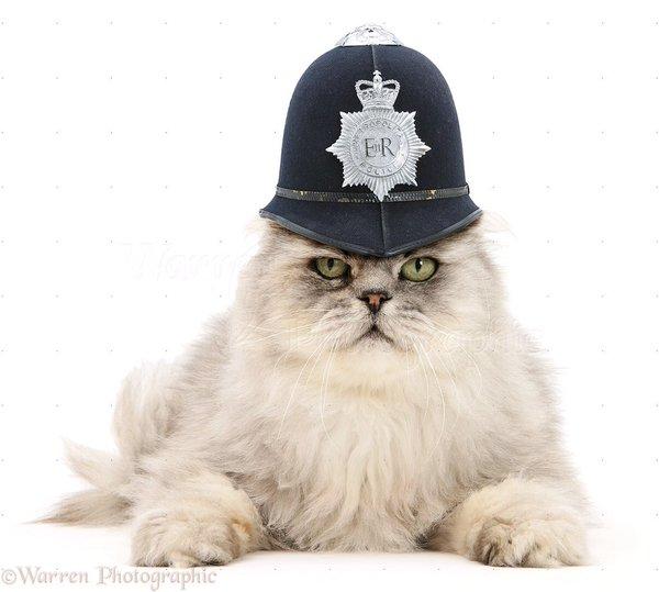 警官の帽子をかぶったネコ