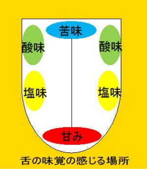 舌の上の味蕾の分布図