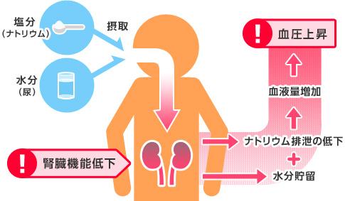 腎臓が悪くなると血圧が上がる機序