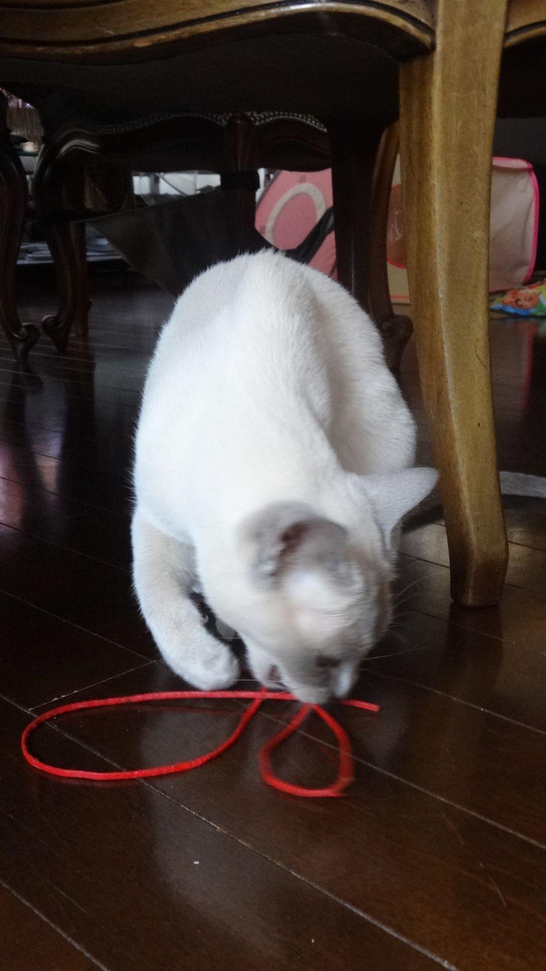 紐で遊ぶ楓