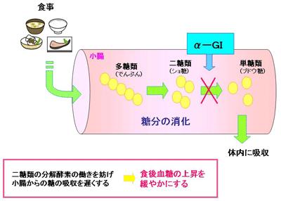 αグルコシダーゼ阻害薬の作用機序