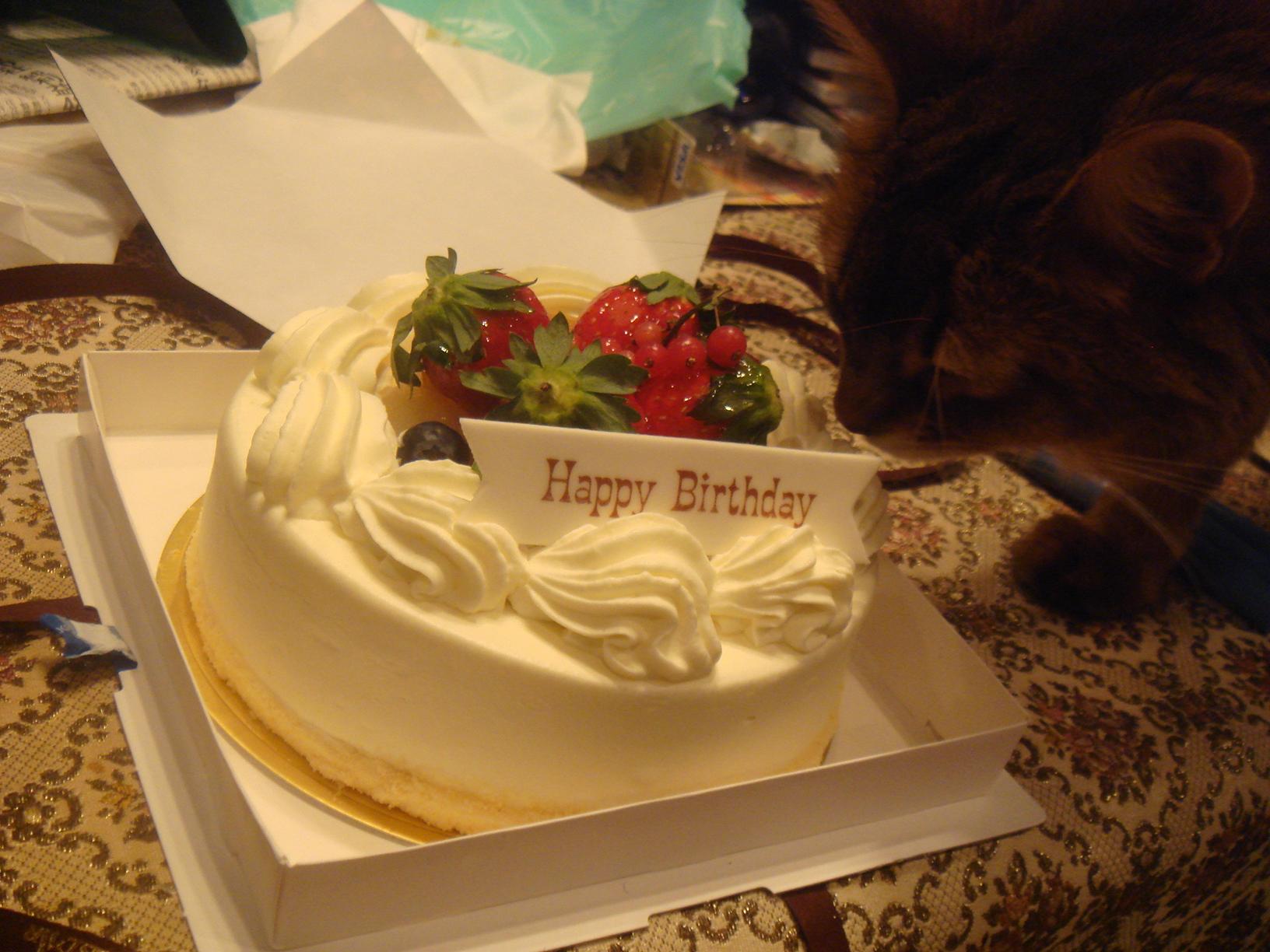 お誕生日ケーキを舐めるローズ