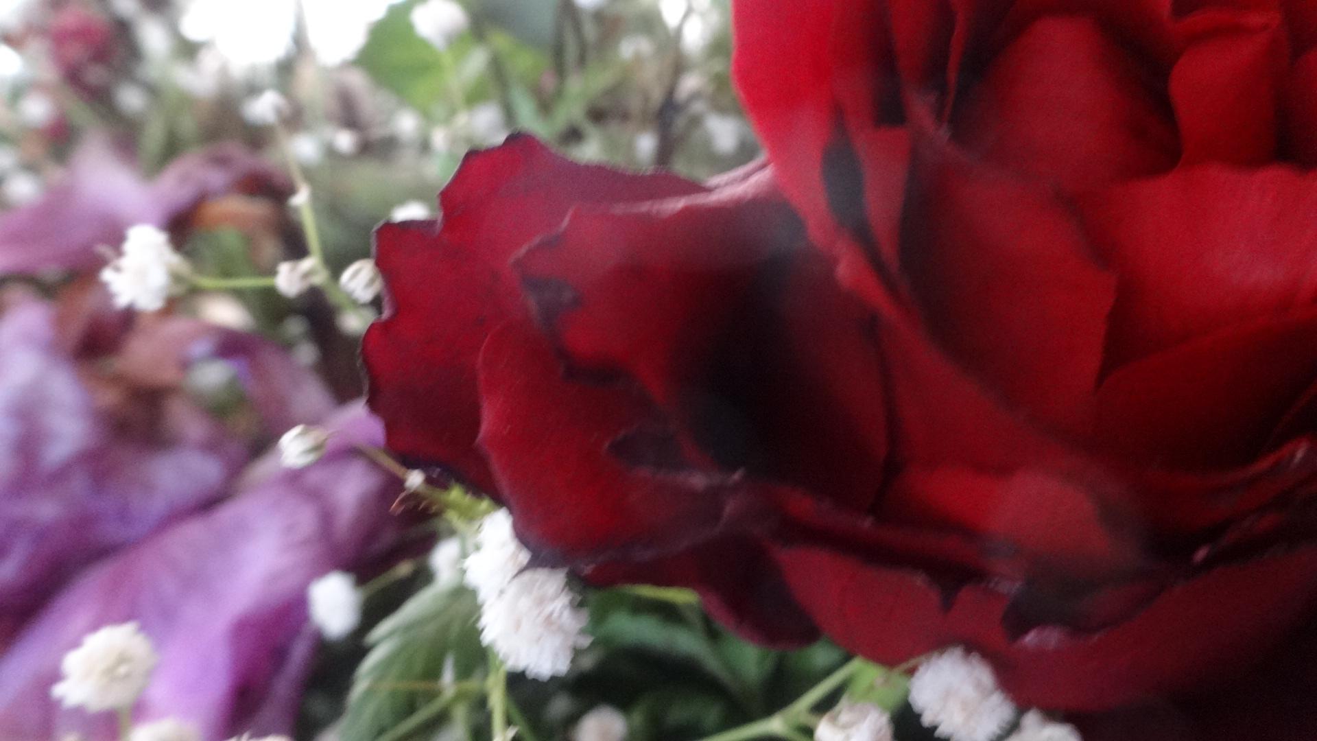 かじられたバラの花