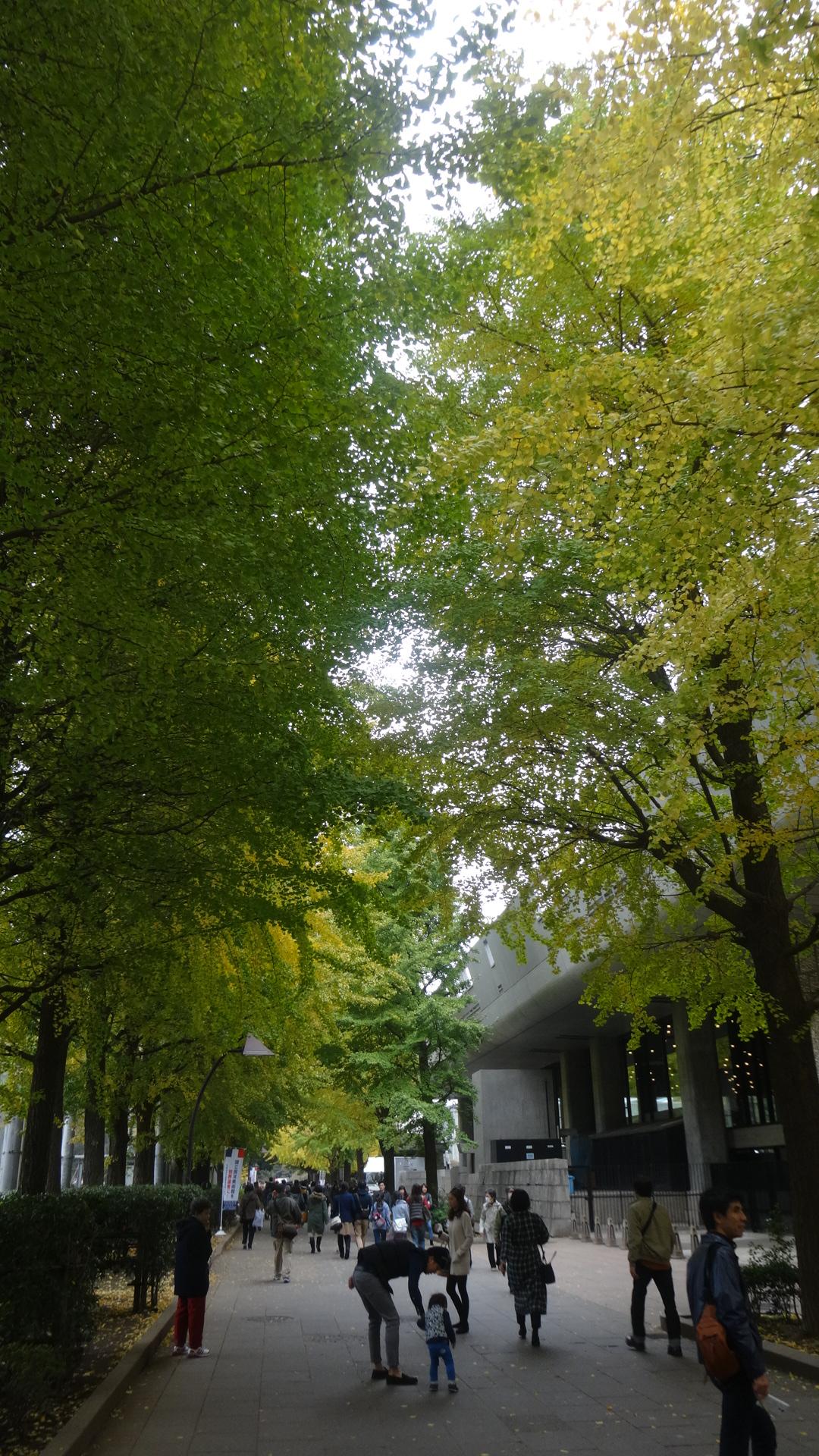 銀杏がきれいに色づいた上野の山