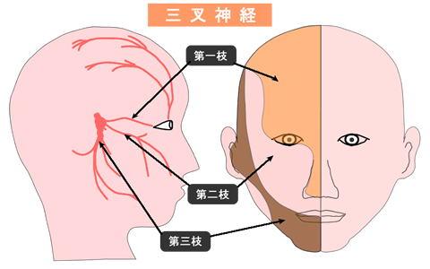 三叉神経領域