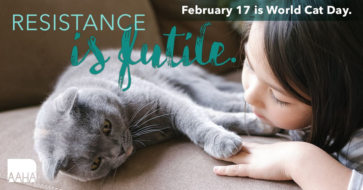 ヨーロッパの2月17日のネコの日を祝うカード