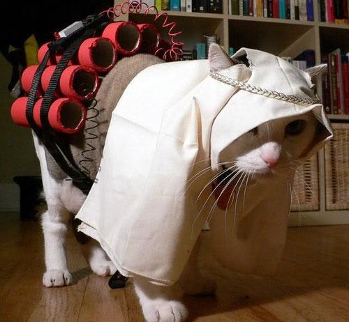テロリストのコスプレをしたネコ