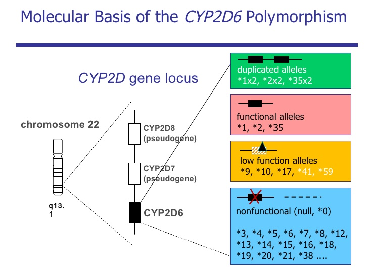 CYP2D6の遺伝子多型と薬物代謝活性の関連を示す図