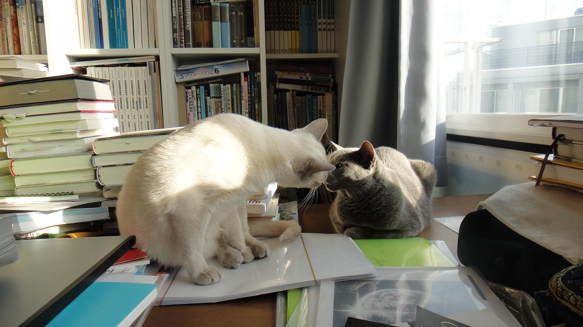 鼻チューするデイジーと楓