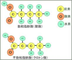 脂質の構造式