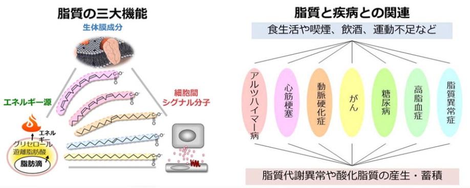 脂質の機能 病気との関わりを示した図