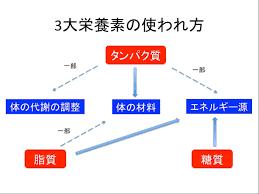 3大栄養素の使われ方を示した図