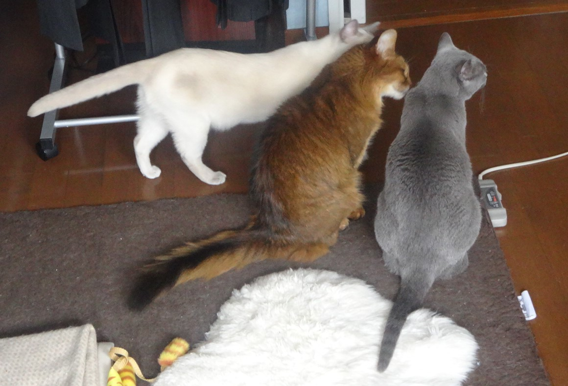 我が家の3匹のネコの写真