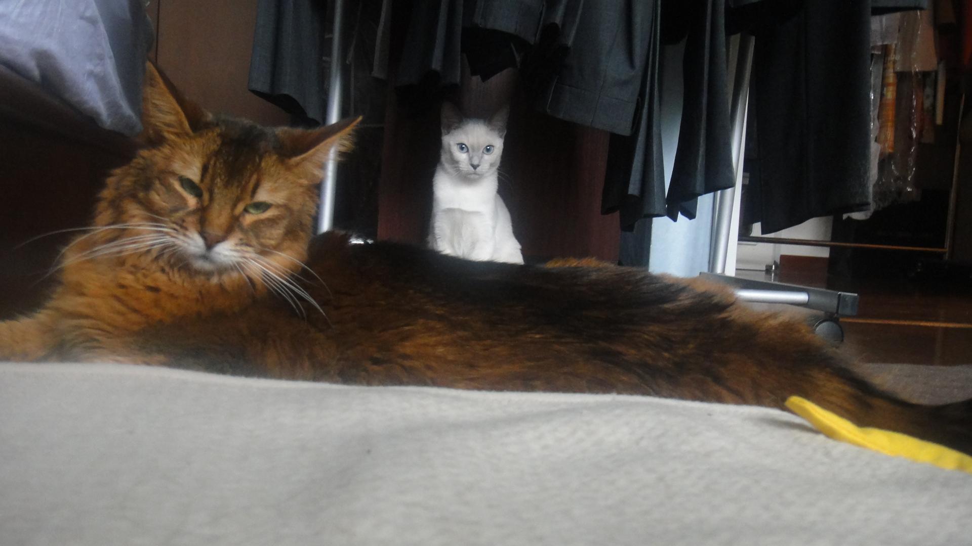 ローズの後ろでお座りしている楓