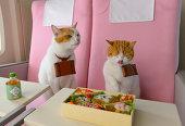 機内食を食べるネコの写真