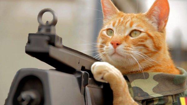 銃を構えてネズミを狙うネコ3