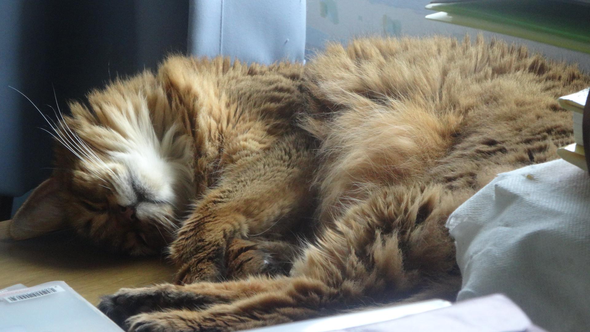 床暖の上で寝ている様子