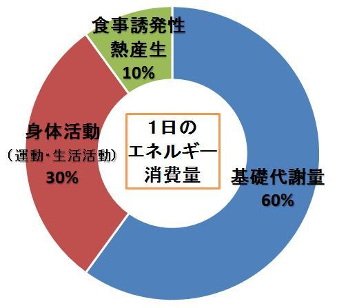 基礎代謝が60%であることを示すグラフ