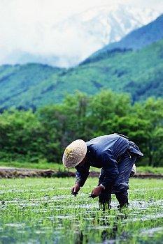 農耕生活の様子