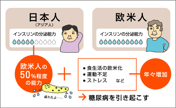 日本人のインスリン分泌低下を説明する図