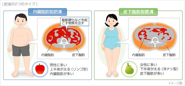 内臓脂肪 皮下脂肪を比較するイラスト