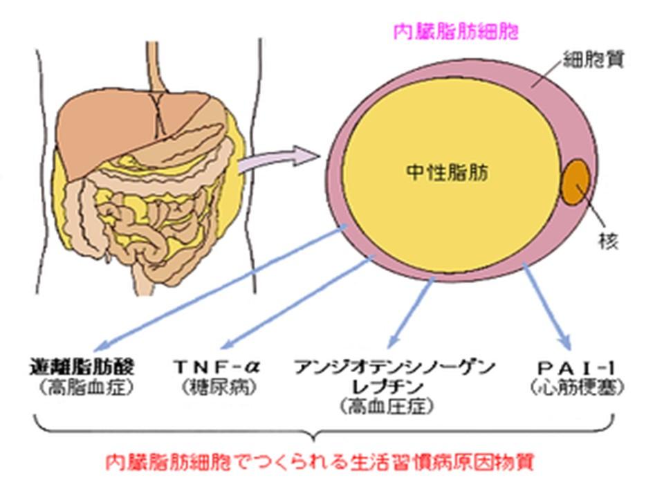 アディポカインと生活習慣病の関連を説明する図