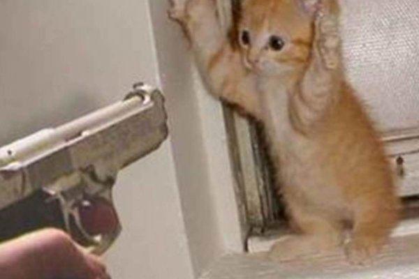 両手を上げ降伏ポーズのネコ2