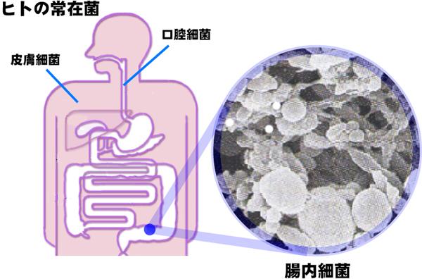 腸内細菌叢って何?