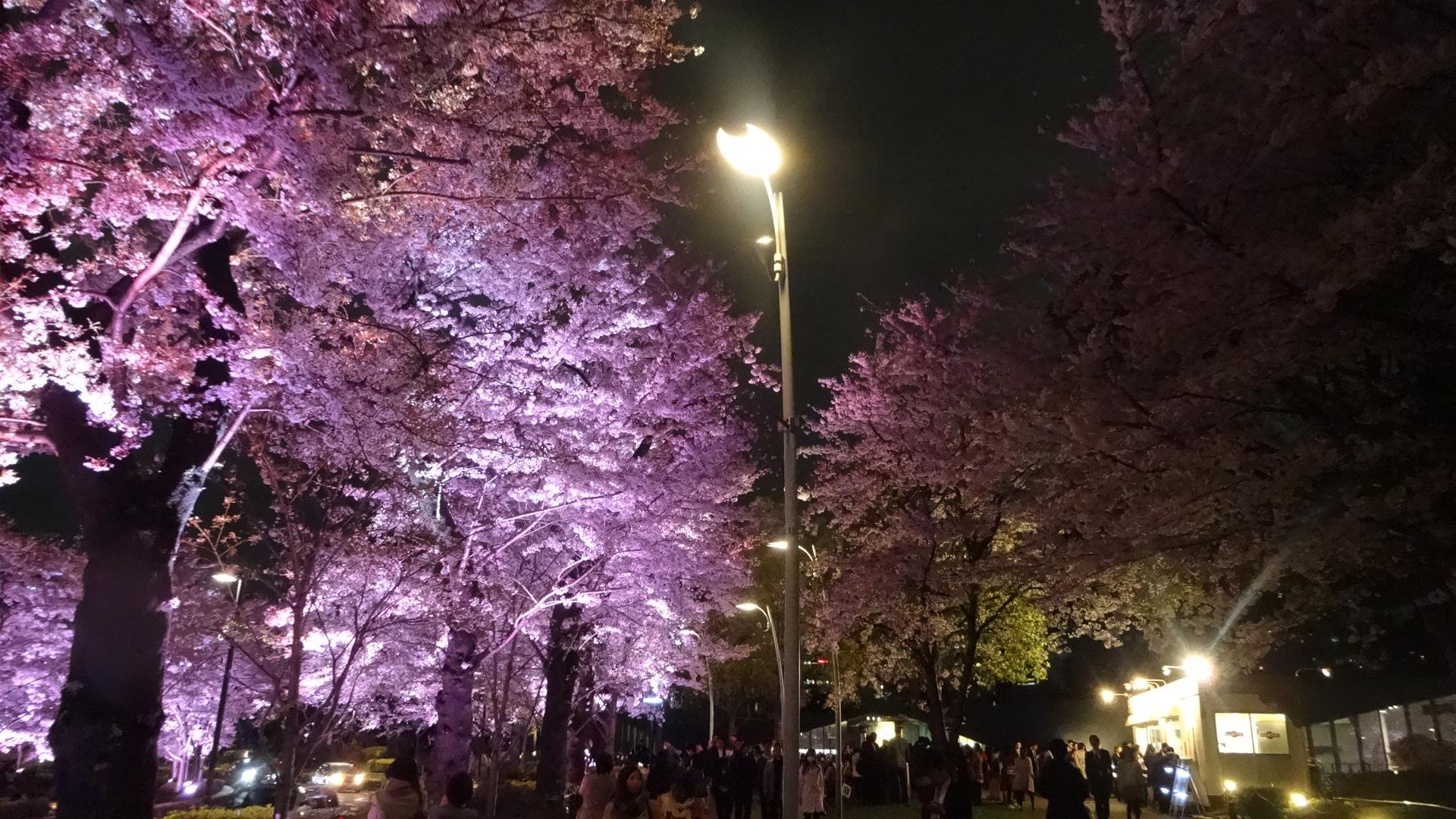 ミッドタウンの夜桜の写真その3