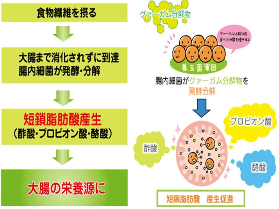 腸内細菌が短鎖脂肪酸を産生する過程の説明図