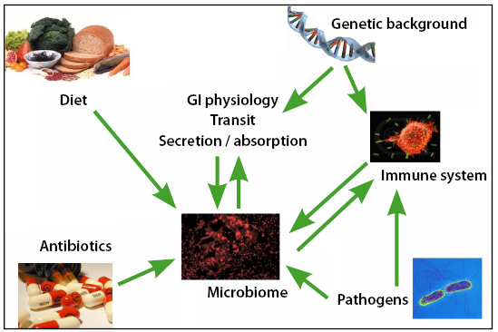 抗生物質が腸内細菌叢を乱している様子