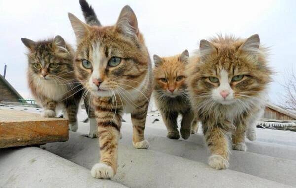 テロリストのように狂暴そうなネコの群れ