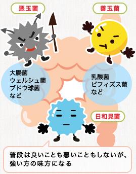 善玉菌と悪玉菌の特徴を説明する図