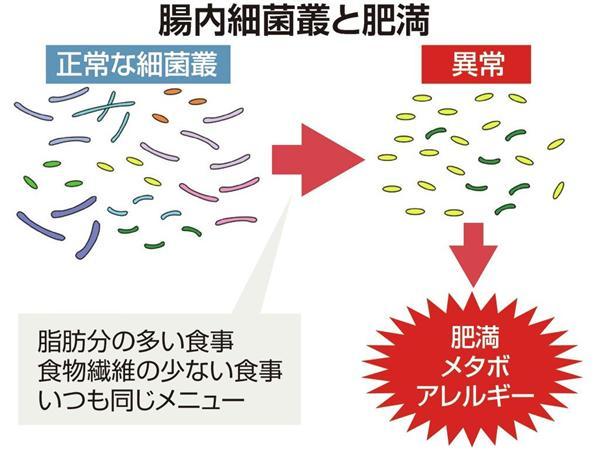 腸内細菌と肥満の関係を示した図