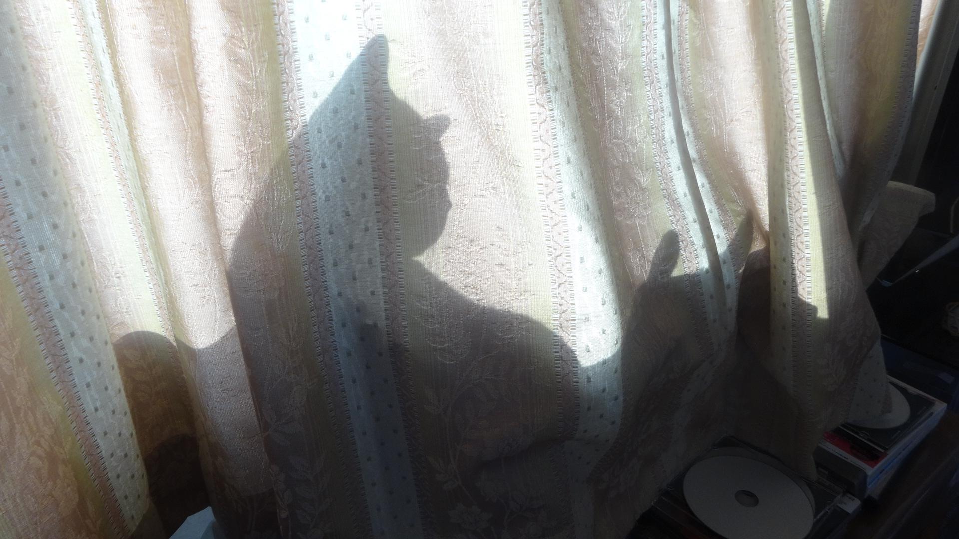 窓際で日光浴するデイジー