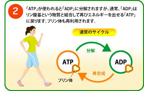 ATPの解説2