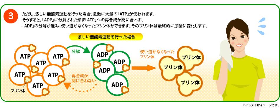 ATPの解説3