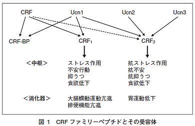 CRF1 CRF2による作用をまとめた図