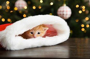 靴下のなかで寝るネコ