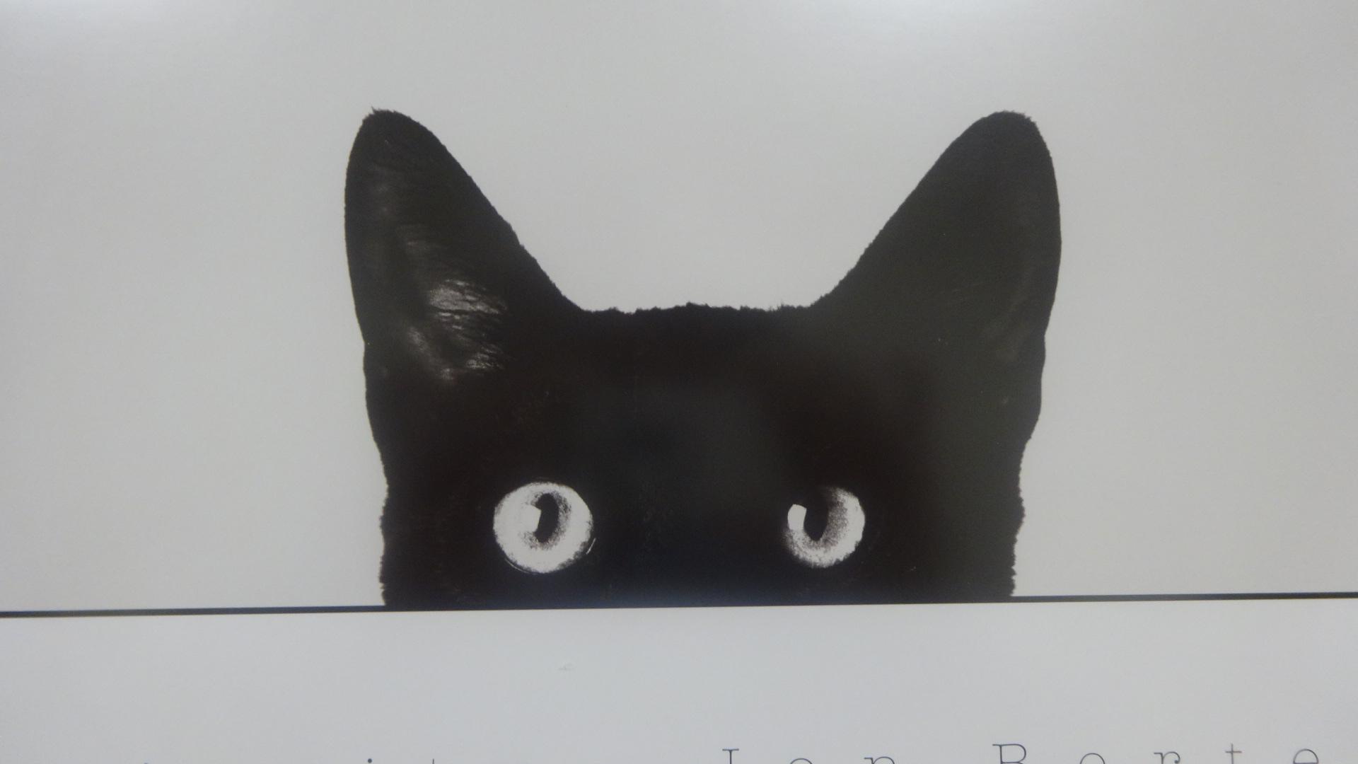 黒ネコの写真